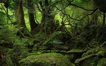 japan-s-infamous-suicide-forest-is-so-bone-chilling-it-inspired-a-horror-movie-743689